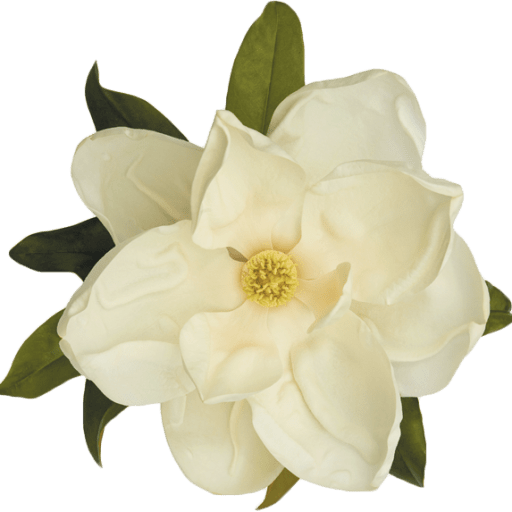 Gardenia PNG Transparent Images Free Download.
