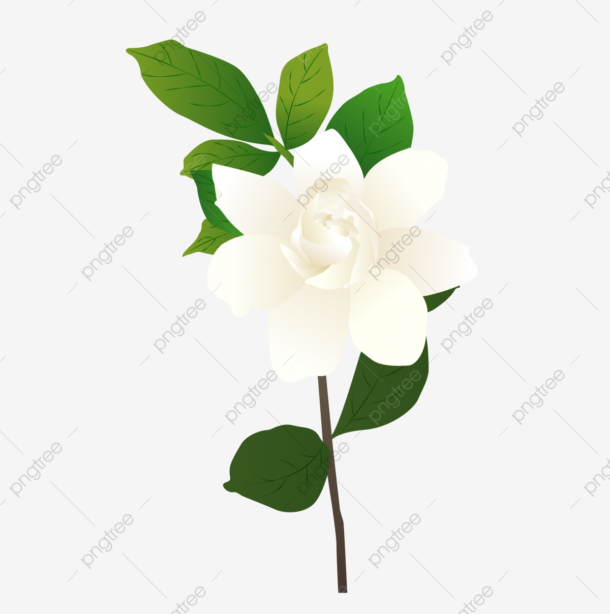 Hand Drawn Illustration Gardenia Flower Available For Commercial Use.