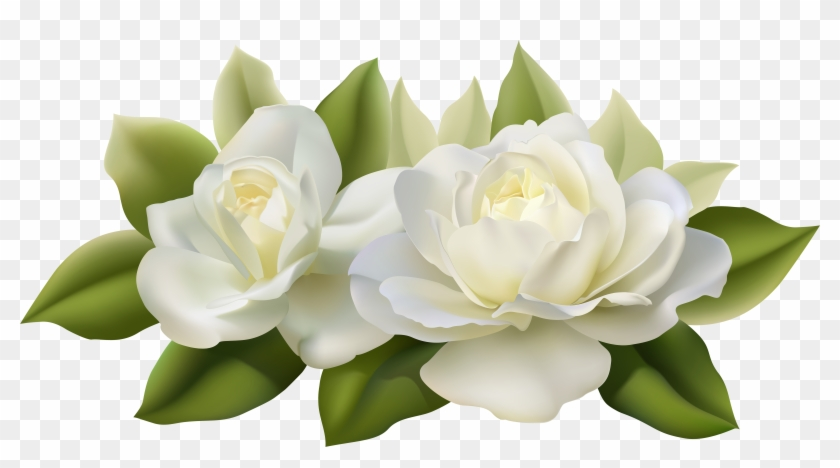 Gardenia Flowers Png Transparent, Png Download.