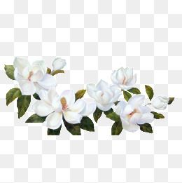Gardenia, White Flower, Green Leaves PNG Transparent Image and.