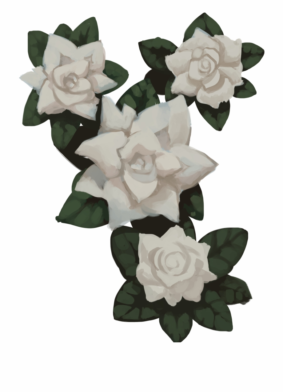 Transparent Flowers Gardenia.