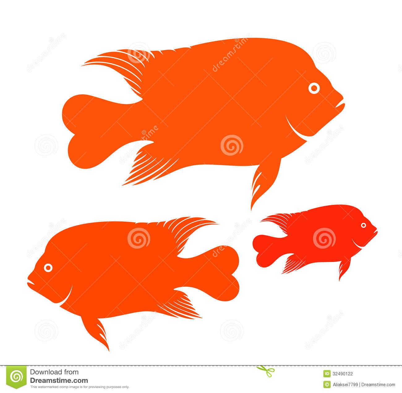 Garibaldi Fish Stock Photography.
