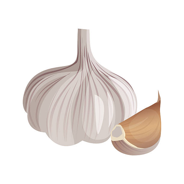 Best Garlic Illustrations, Royalty.