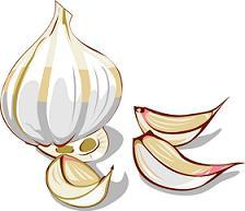 Free Garlic Clipart.