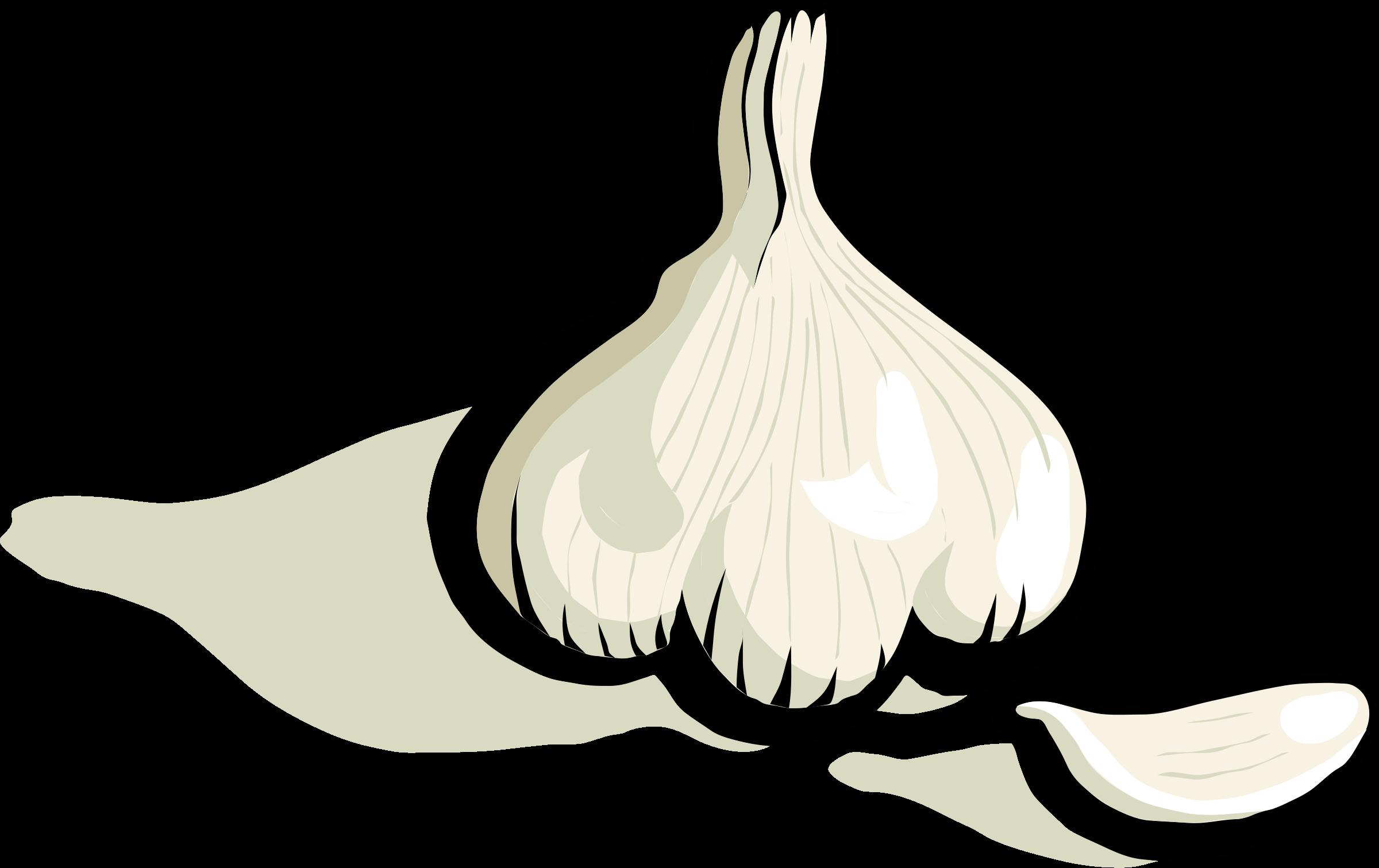 Garlic 20clipart.