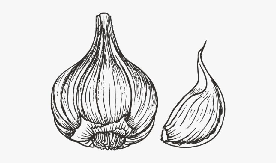 Garlic Clipart Black And White.