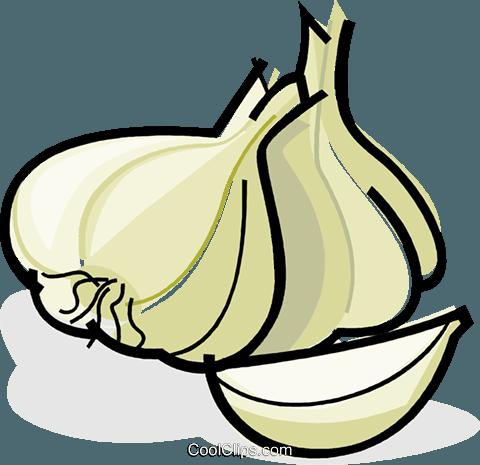 garlic cloves Royalty Free Vector Clip Art illustration.