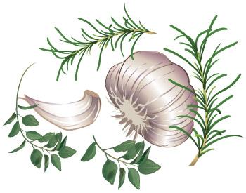Garlic Oregano Rosemary vector clipart.