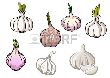 10,496 Garlic Stock Illustrations, Cliparts And Royalty Free.