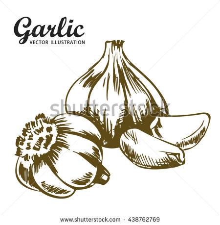Clove Of Garlic Stock Vectors, Images & Vector Art.