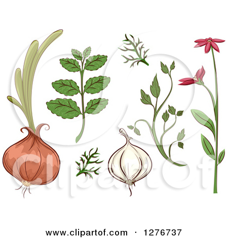 Clipart of Herbal Plants and Roots.