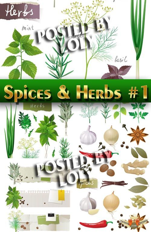 herbs, dried spices, onions, garlic vector clipart.