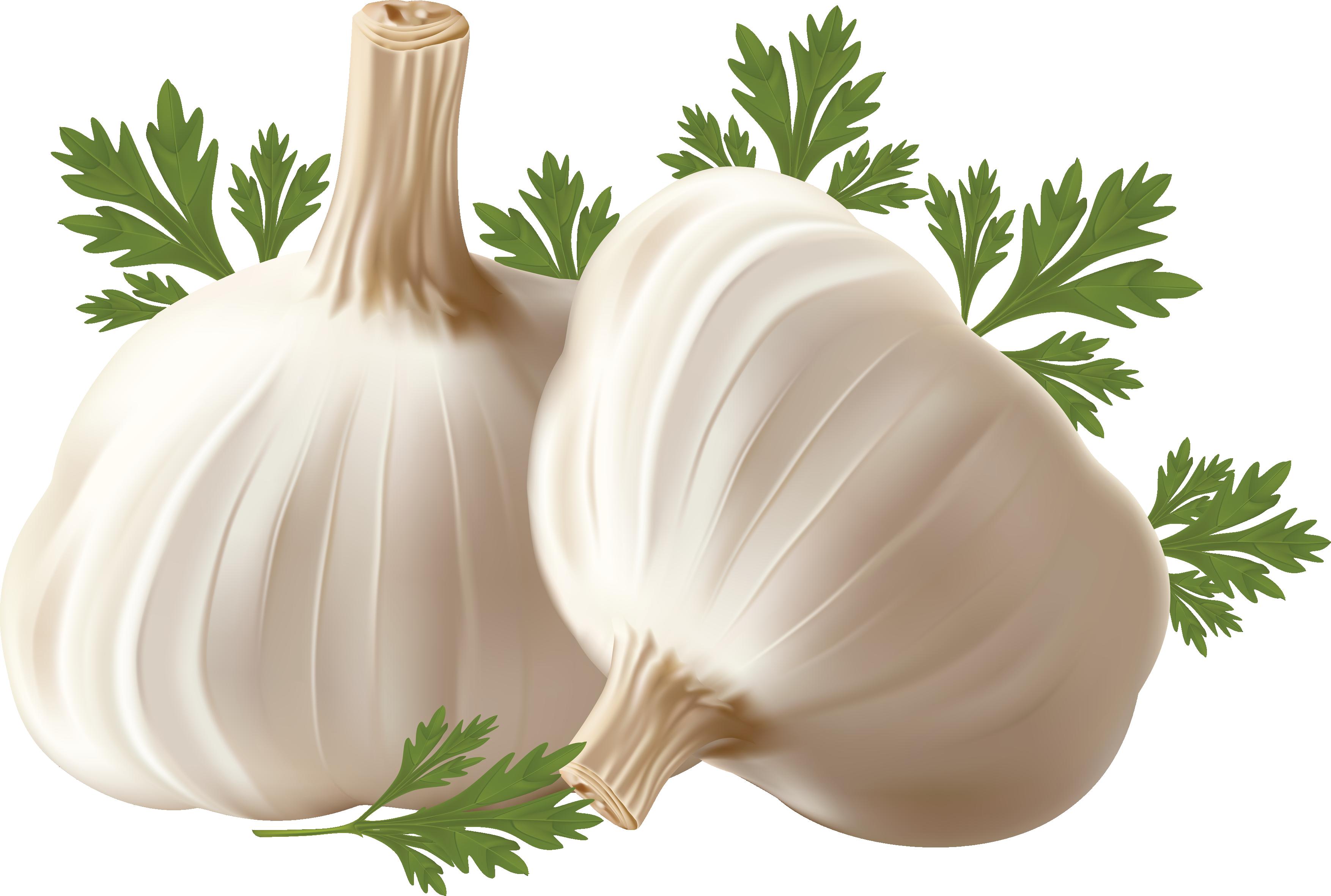 Garlic PNG.