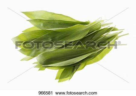 Stock Photography of Ramsons (wild garlic) leaves 966581.