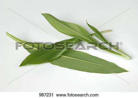Stock Photography of Ramsons (wild garlic) leaves 987231.