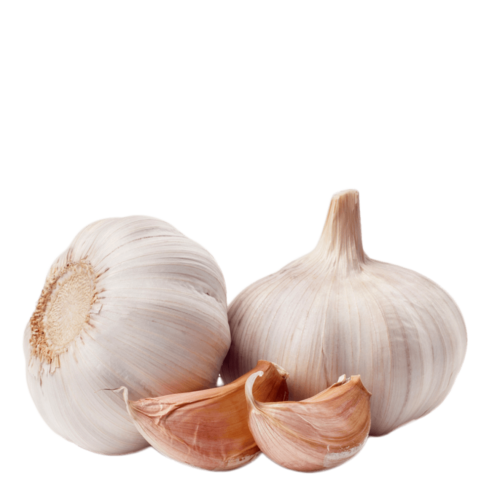 Garlic PNG images free download, garlic PNG.