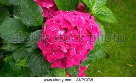 Plakativ Stock Photos & Plakativ Stock Images.