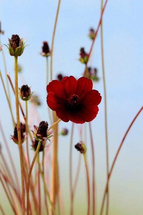 Gartenstaude clipart #12