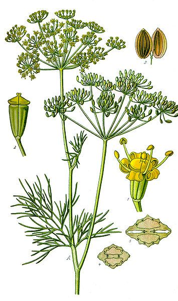 1000+ images about _herbs on Pinterest.