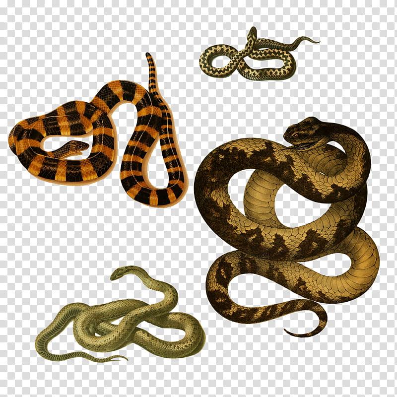 Snakes , garter snake transparent background PNG clipart.