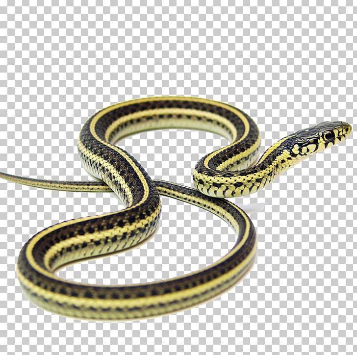 Narcisse Snake Pits Garter Snake Kingsnakes Applesnake PNG.