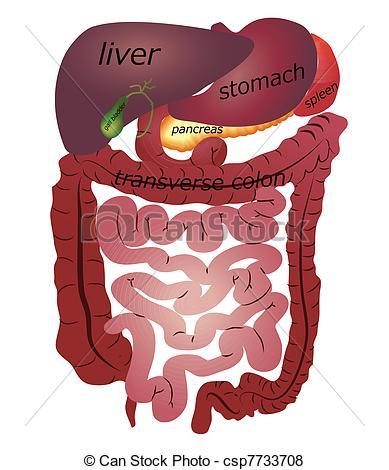 Gastrointestinal Vector Clip Art Illustrations. 663.