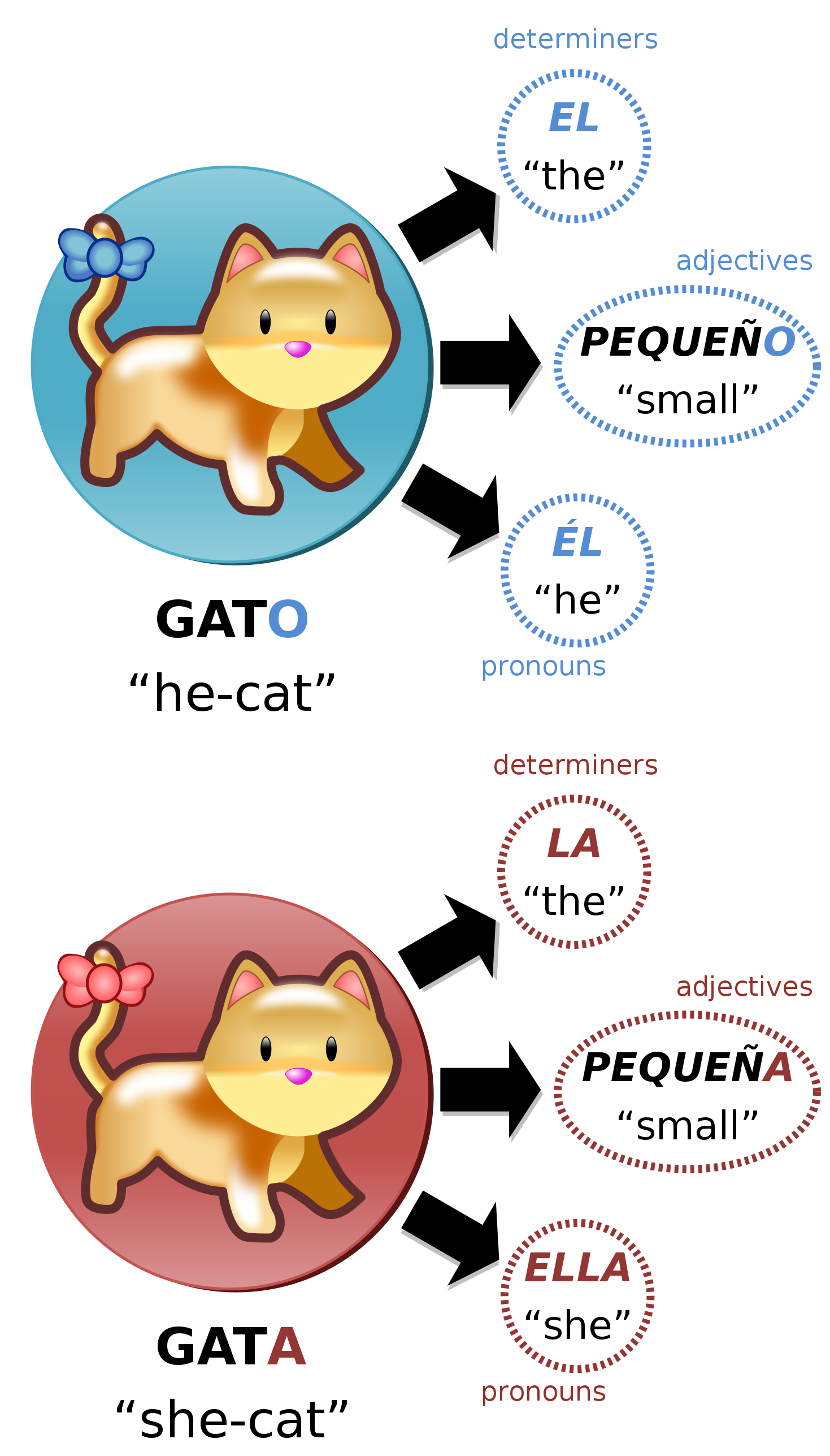 File:Gato vs gata, illustration of grammatical gender in Spanish.