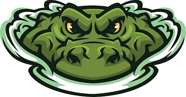 Best Alligator Illustrations, Royalty.