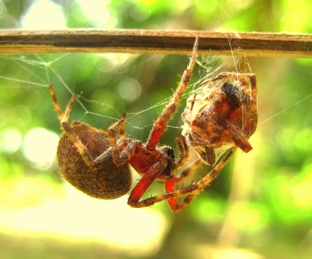 The World's Best Photos of gagamba and insekto.