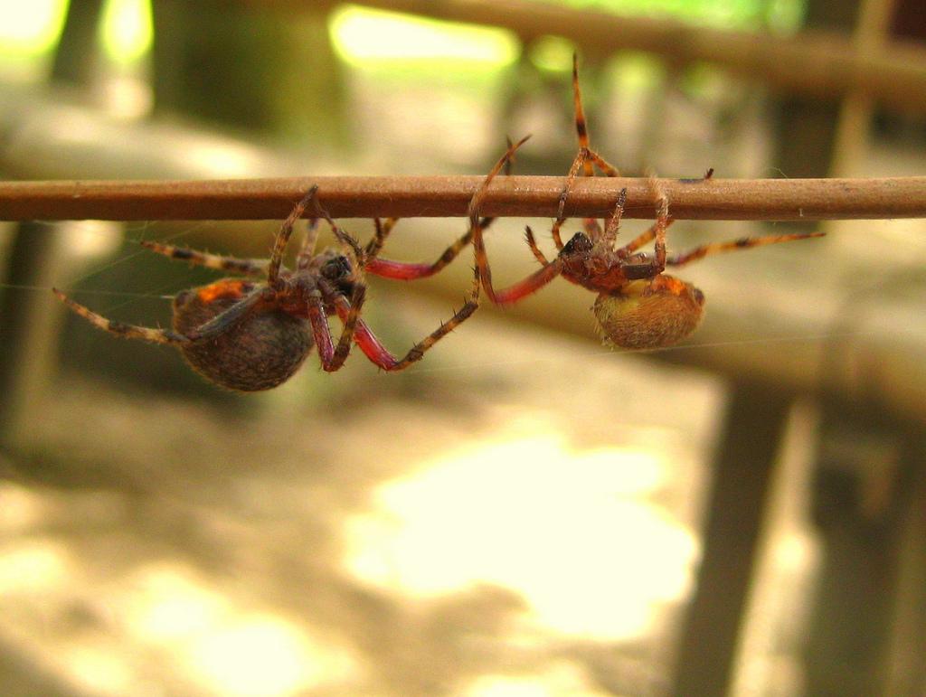 Flickr photos tagged gagamba.
