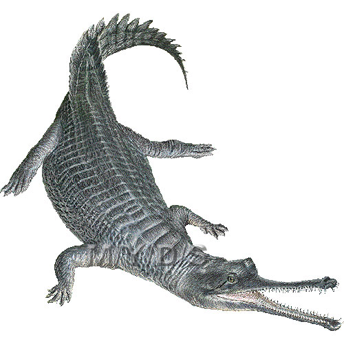 Gharial, Indian Gavial clipart graphics (Free clip art.