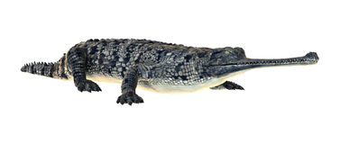 Gavial Clipart by Megapixl.