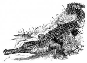 Alligator Clip Art Download.