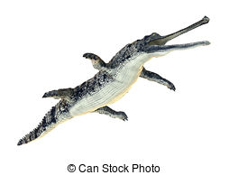 Gavial Illustrations and Clipart. 37 Gavial royalty free.