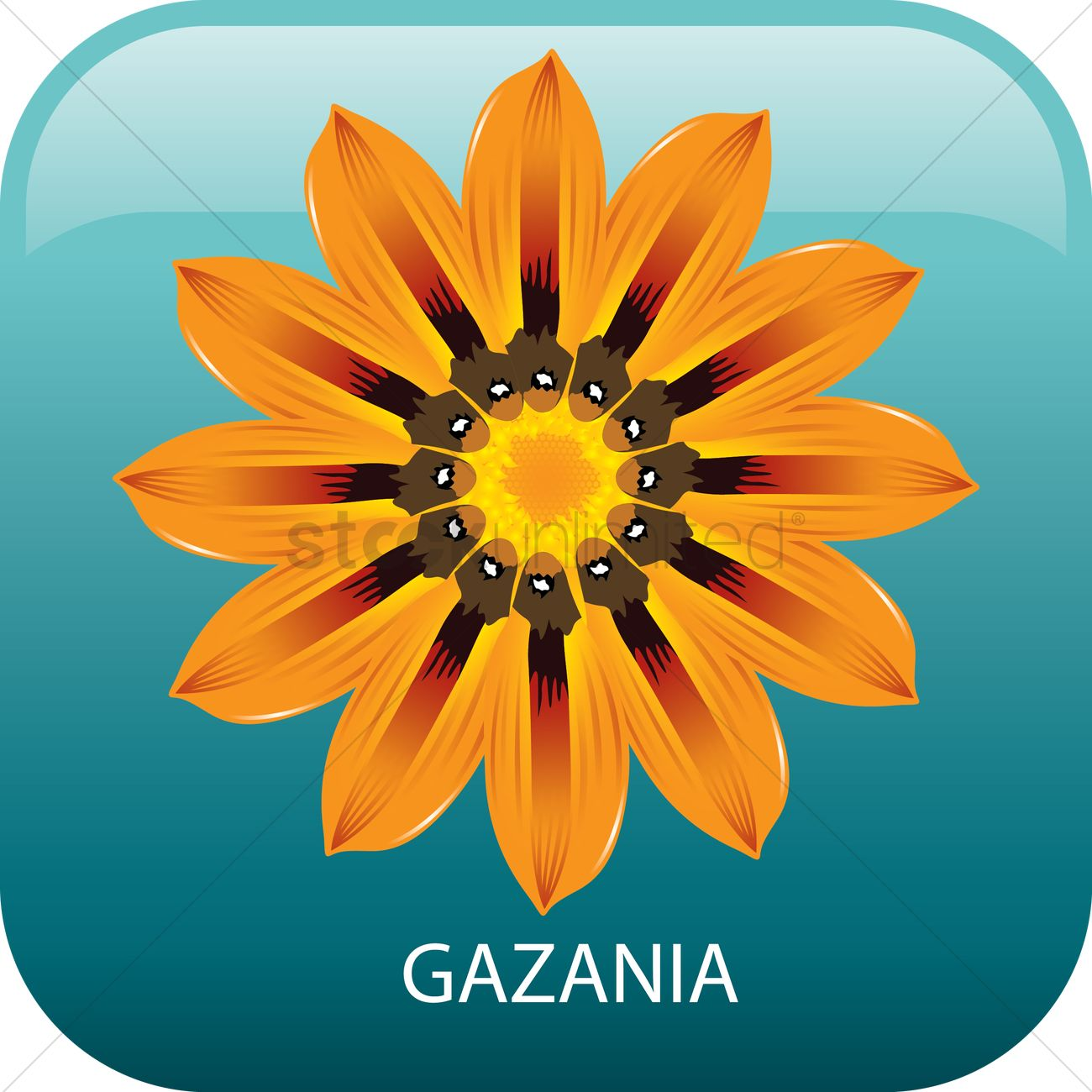 Gazania Vector Image.
