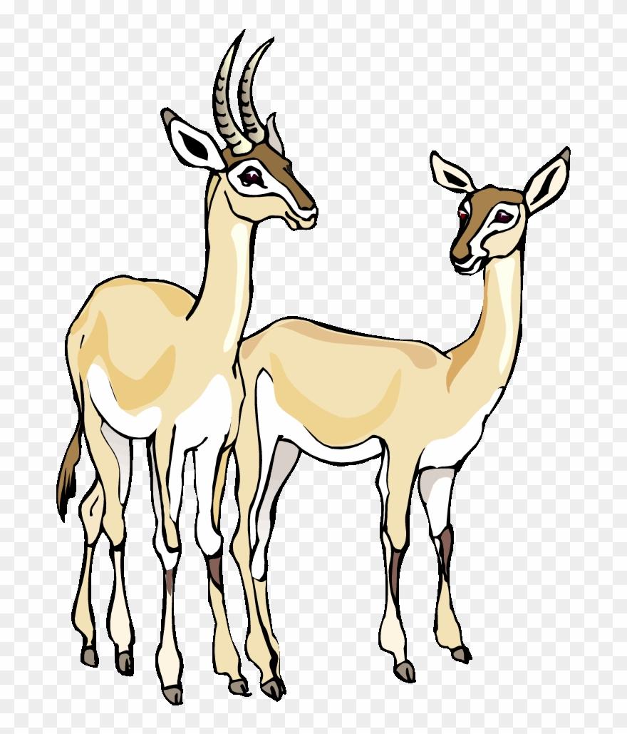 Free Gazelle Clipart Baby Llama Clip Art Baby Llama.