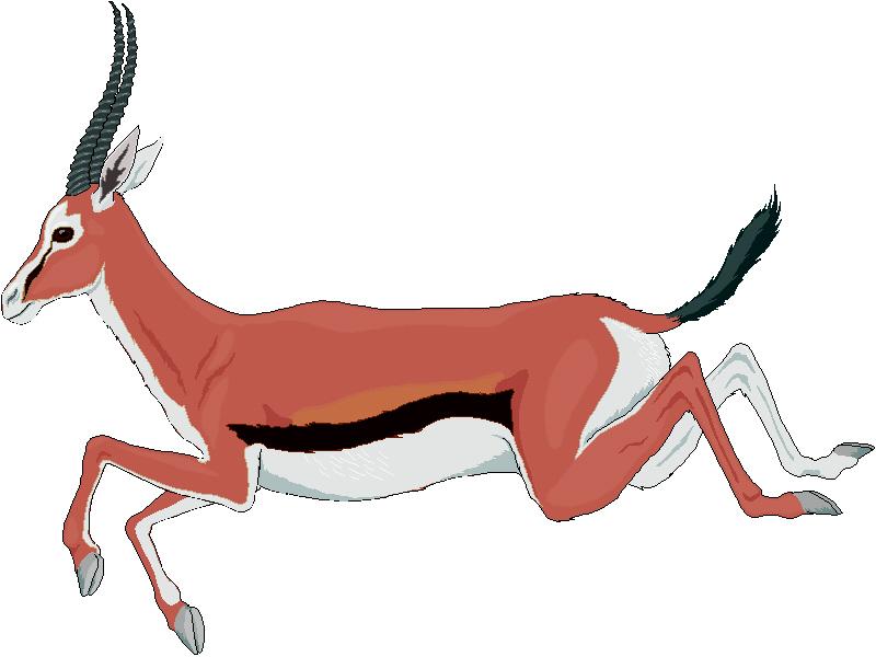 Gazelle Clip Art.