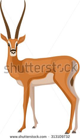Gazelle Stock Photos, Royalty.