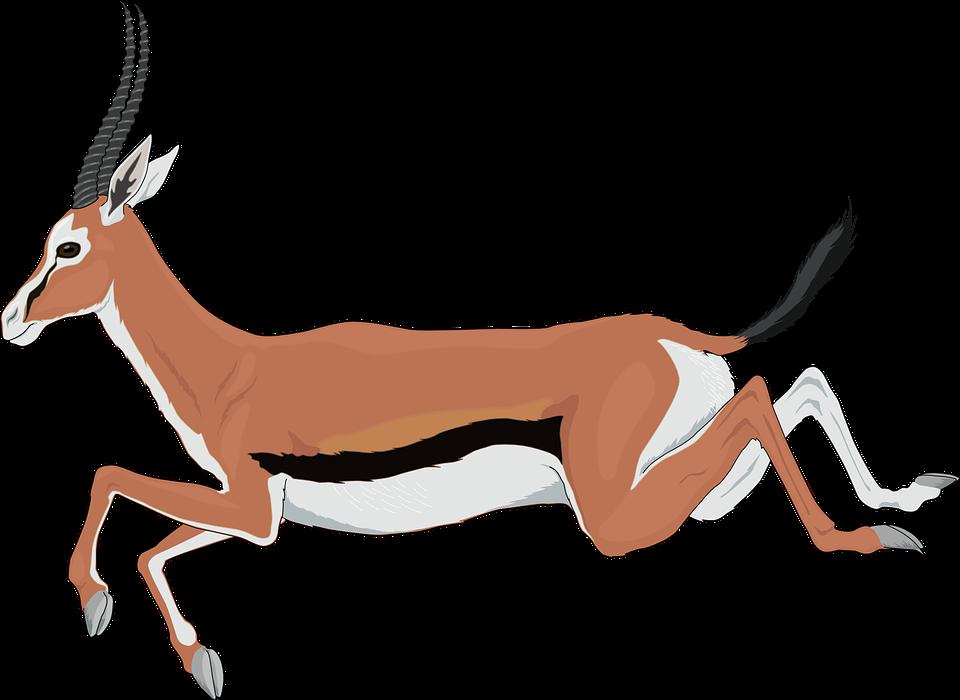 Gazelle impala clipart 20 free Cliparts   Download images ...