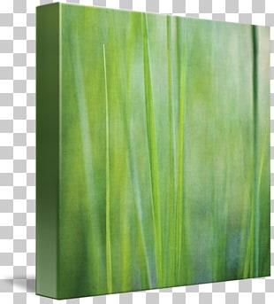 Gallery wrap Modern art Canvas Lawn, gazon PNG clipart.