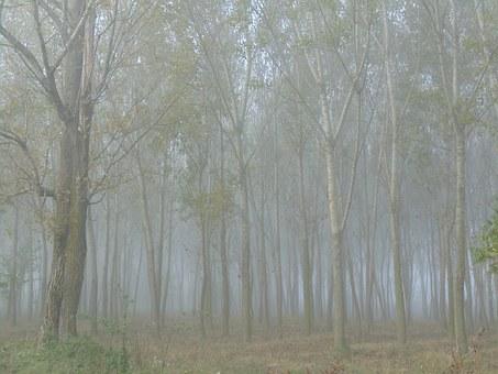 Fog, In, The, Morning.