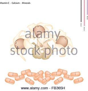 Geastrum Stock Photos & Geastrum Stock Images.