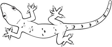 Gecko clipart black and white.