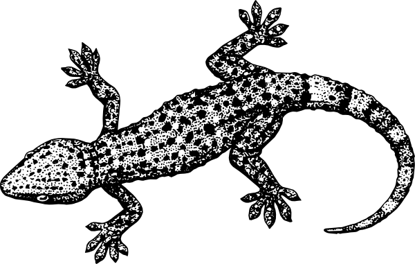 Gecko Reptile Clip Art at Clker.com.