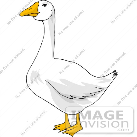 Snow geese clipart.