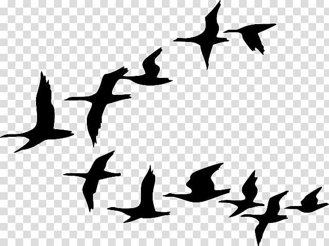 Canada Goose Bird Flock , clouds sky city silhouette.
