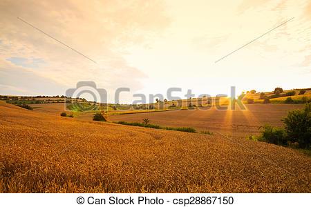 Stock Bilder von Felder, weizen, Sonnenuntergang, gegen, sonne.