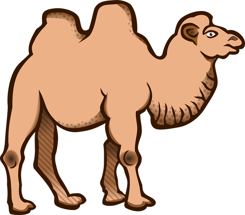 Free vector graphic: Animal, Animals, Bactrian Camel.