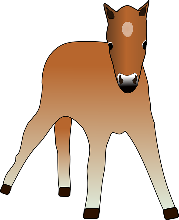Free vector graphic: Foal, Animal, Colt, Cup, Horse.