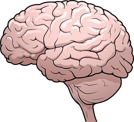 Human Brain Drawing Clipart Image.